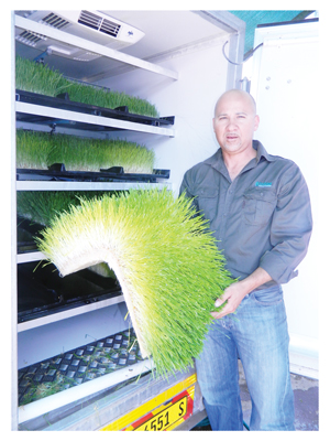 Heinrich Lesch with a sprout feed of barley grown in the fodder container (Photograph by Hilma Hashange)