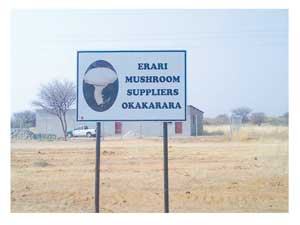 Erari Mushroom Suppliers in Okakarara is an agri-project assisted by UNAM's ZERI project.