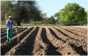 Conservation tillage starts when the land is prepared for planting. It has a dramatic impact on yield. (Photograph courtesy of CES/CLUSA)