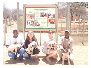 RCP's Ayoub Msago (left) with Dr. Laurie Marker (centre left), along with Livestock Guarding Dog Programme Manager Ana Bradley (center right) and Small Stock Manager, Tyapo Toivo (right). The dogs they hold are on their way to Tanzania to become the nucleus of a breeding programme for guard dogs to protect livestock from predators.