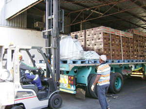Keep the environment clean: Nambia Breweries workers forklift recyclables on to the haulage trucks at the depots in the North so that they can be transported to the mother plant in Windhoek