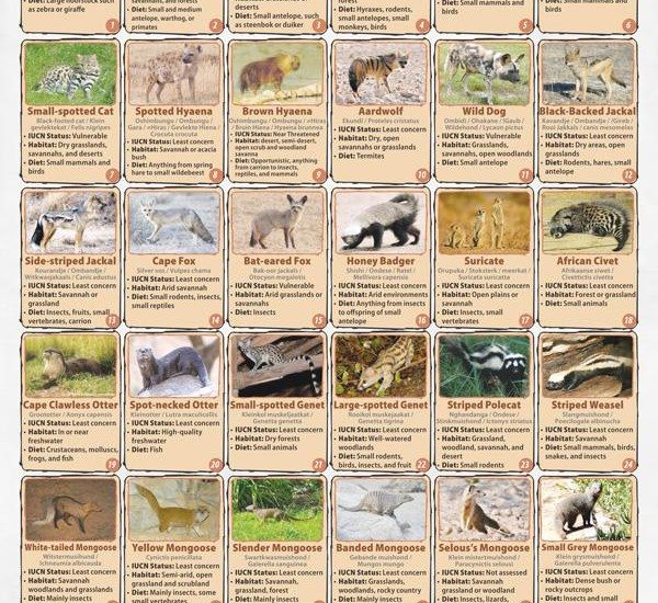 The Carnivore Tracker is set up using the poster created by LCMAN showing photos of each of the 33 small, medium and large carnivores known in Namibia.