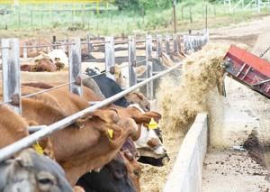 Okapuka feedlot  faring well