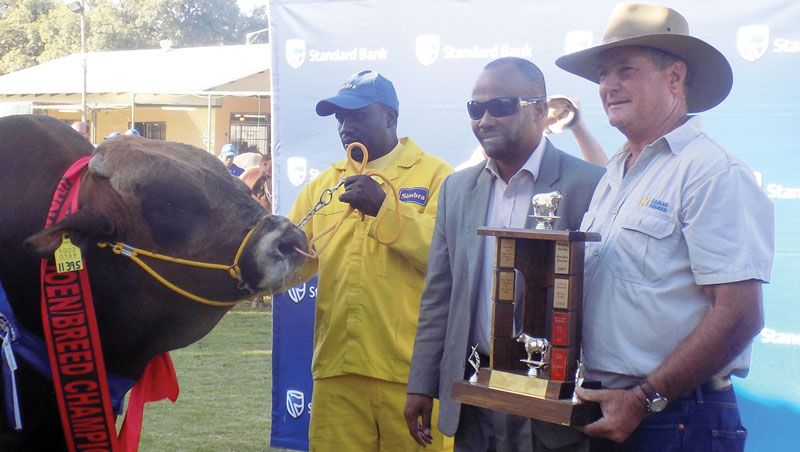 Stud bulls impress despite devastating drought