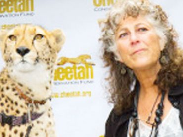 Cheetahs makes it to CITES