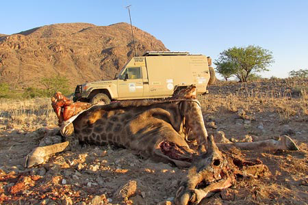 Troubled times for Namibian wildlife – conservancy stock dwindling