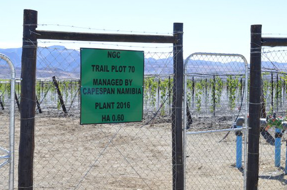More grape varieties expected