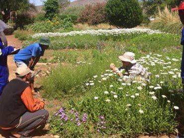 Bushmen crop and livestock farmers learn more at Farm Krumhuk