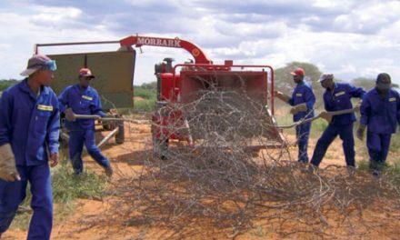 Biomass technology demonstration centre proves viability