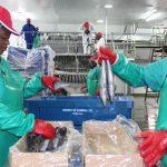 Low fish stocks lead to job losses