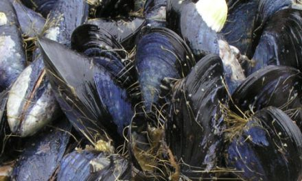 Mussels now safe to consume – ministry