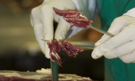 Rise in beef measles a risk to EU market