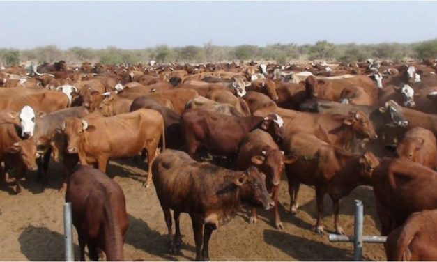 Livestock sector in Northern communal areas to get boost from EU