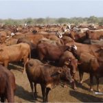 Zimbabwe turns to Namibia to beef up stocks as drought bites
