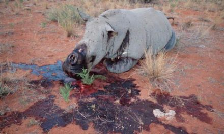 Seven elephants, 19 rhinos poached since January – ministry