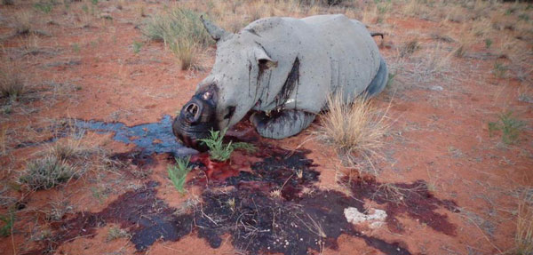Poachers bag more rhinos and elephants
