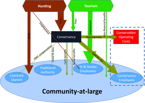 Study on complementary benefits of tourism and hunting to communal conservancies released