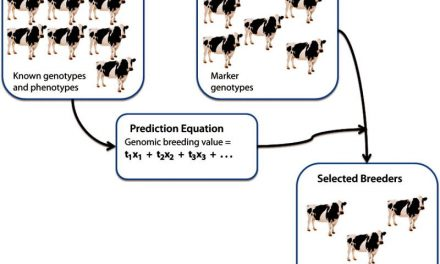 Selection is critical to optimal livestock performance
