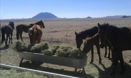 Namib mustangs running out of fuel