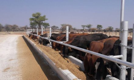 Completed Annasruh feedlot projected to accommodate 12,000 cattle