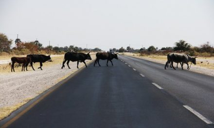 Lack of funds to fix fences for livestock on farms contributing to road accidents