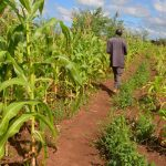 Agriculture sector records growth in Q1 amid COVID-19 pandemic