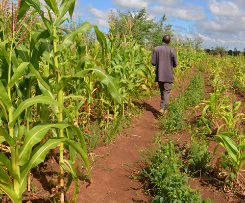 To succeed, Africa's agricultural revolution needs to be very different to those seen in the rest of world
