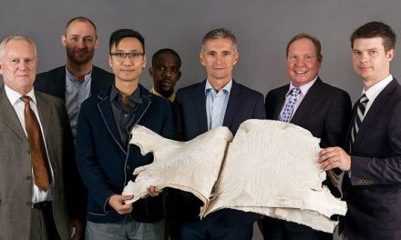 All 39,000 Swakara pelts sent to Copenhagen sold but for 8% less