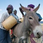 A woman without a donkey is a donkey herself – African proverb