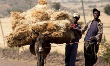When rural communities lose their donkeys, hardship follows