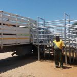 Slaughter Cattle Delivery Agreements to commence in November