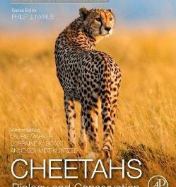 Cheetah conservation manuscript to hit the book shelves soon