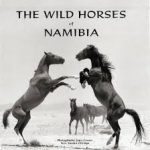 Fate of Namib's wild horses still in limbo