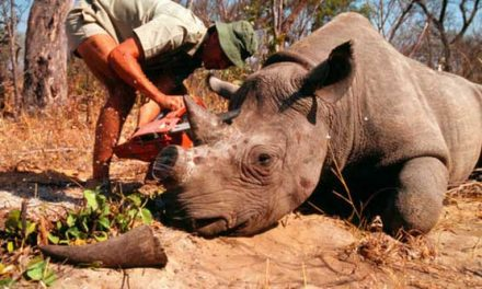 Local experts to participate in workshop on wildlife trafficking