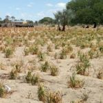 Africa developing new tools to build resilience to future drought shocks