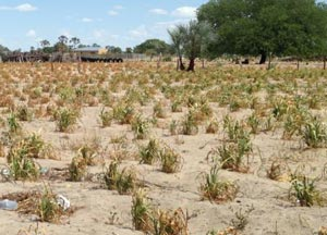 Drought preparedness in communal areas