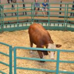 Cattle production decreases between January and September