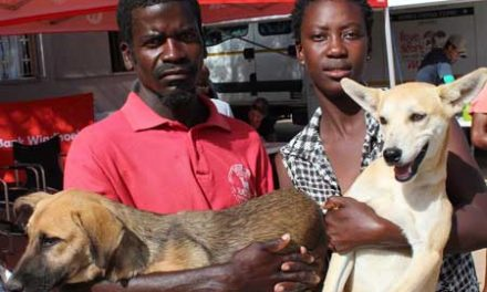 Spay Day campaign treats over 60 stray animals in Okahandja