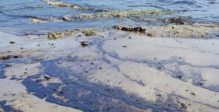 No new oil spills detected at Afrodite beach and Walvis Bay Lagoon