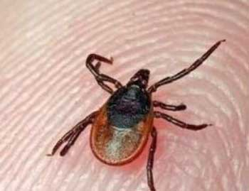 Crimean-Congo Hemorrhagic Fever claims one person