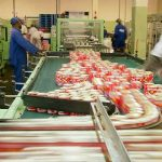 Imported frozen pilchard keeps doors open at Namibia's only pelagic cannery