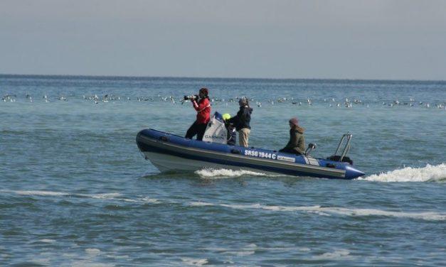 Go Green funding contributes to studies on the impact of tourism on marine wildlife