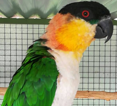 Exotic birds and poultry go under the hammer at maiden