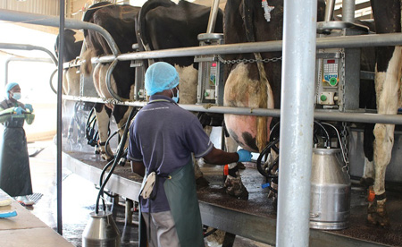 Dairies picks up accolade at recent continental ceremony