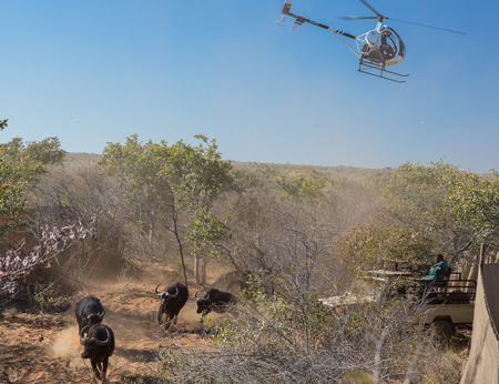 Government bags NS50 million from sale of Foot-and-mouth free Waterberg buffalo
