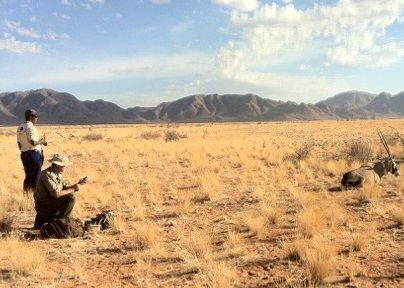 Studying the impact of man-made obstacles in the natural dispersal of large desert animals