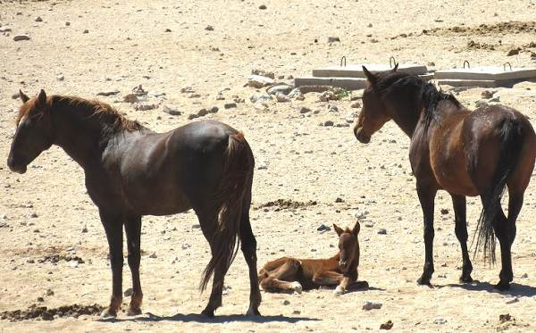 First foal to survive in six years arrives for the wild horses of Garub