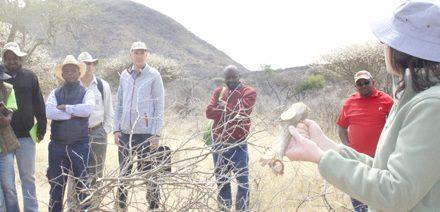 Utilising bush-based animal feed in communal and commercial farming settings