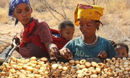 Harvesting, curing and selling dried Devil's Claw earned Bushmen communities nearly N$2 million in 2018