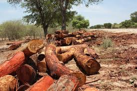 Experts to tackle the issue of the unabated logging